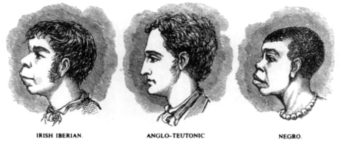 Three profiles, Irish Iberian, Anglo-Teutonic and Negro
